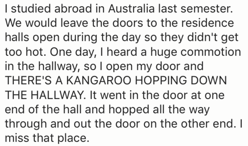 Text - I studied abroad in Australia last semester. We would leave the doors to the residence halls open during the day so they didn't get too hot. One day, I heard a huge commotion in the hallway, so I open my door and THERE'S A KANGAROO HOPPING DOWN THE HALLWAY. It went in the door at one end of the hall and hopped all the way through and out the door on the other end. I miss that place.