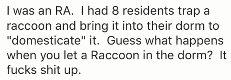 """Text - I was an RA. I had 8 residents trap a raccoon and bring it into their dorm to """"domesticate"""" it. Guess what happens when you let a Raccoon in the dorm? It fucks shit up"""