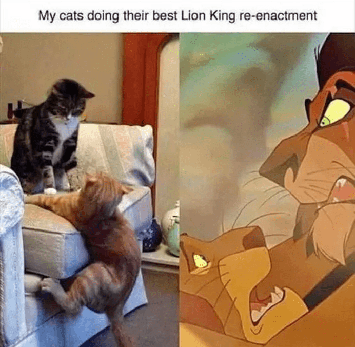 Animated cartoon - My cats doing their best Lion King re-enactment