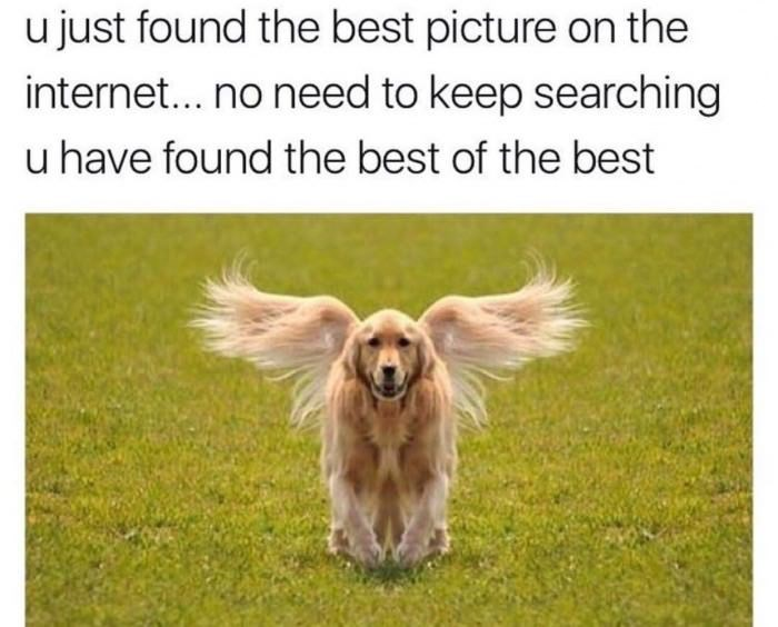 random meme - Dog - u just found the best picture on the internet... no need to keep searching u have found the best of the best