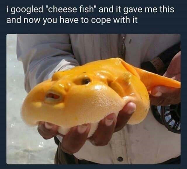 "random meme - Yellow - i googled ""cheese fish"" and it gave me this and now you have to cope with it"