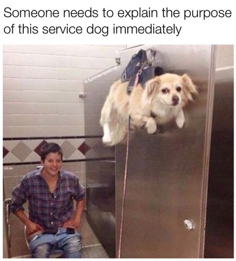 Funny meme asking about the purpose of a service dog, it's hanging from a bathroom stall door.
