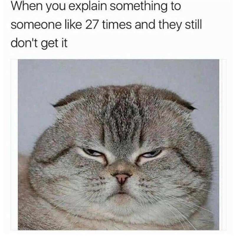funny cat meme about when someone doesn't understand what you keep telling them.