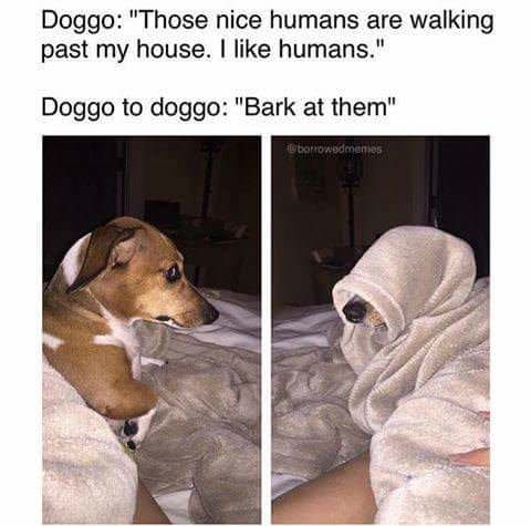 Doggo meme about barking at the nice humans walking past my house.