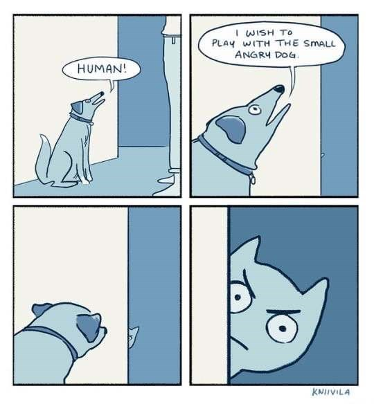 Webcomic in which the dog is calling the cat the short-angry-dog