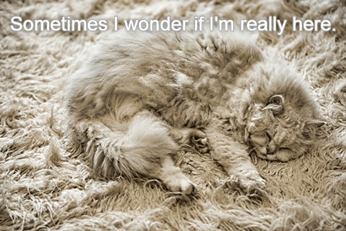 Funny meme of a cat contemplating his existence and at the same time blends in with his carpet background that indeed it is hard to tell if he is there or not.