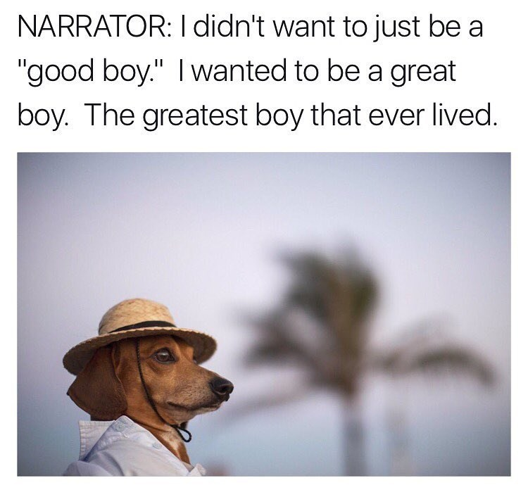 funny meme about the best dog.
