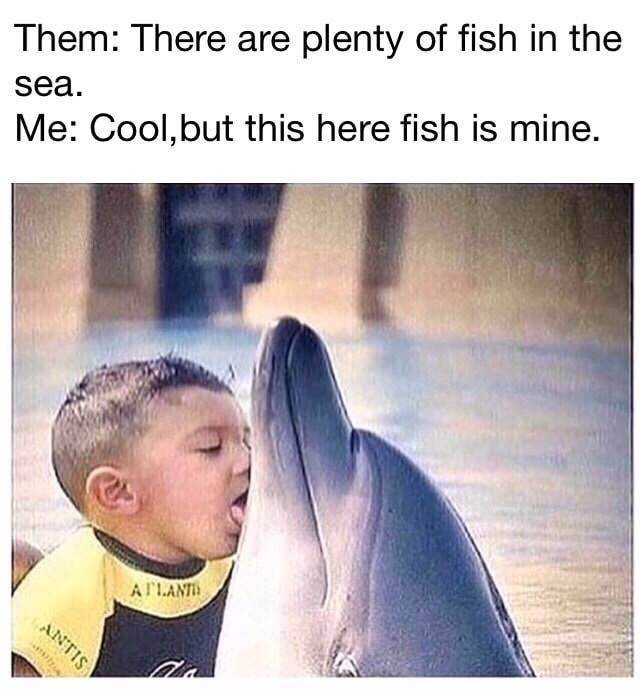 Dolphin meme about there being plenty of fish in the sea.