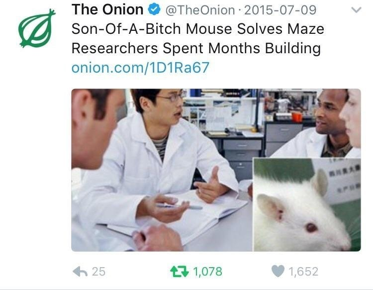 funny onion headline about how a mouse solved the maze researches spent months building.