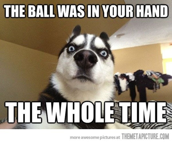 Mammal - THE BALL WAS IN YOUR HAND THE WHOLE TIME more awesome pictures at THEMETAPICTURE.COM