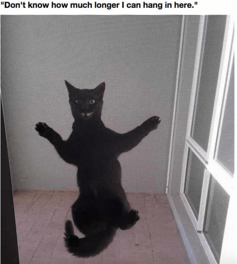Cat hanging onto the screen door rather comically.