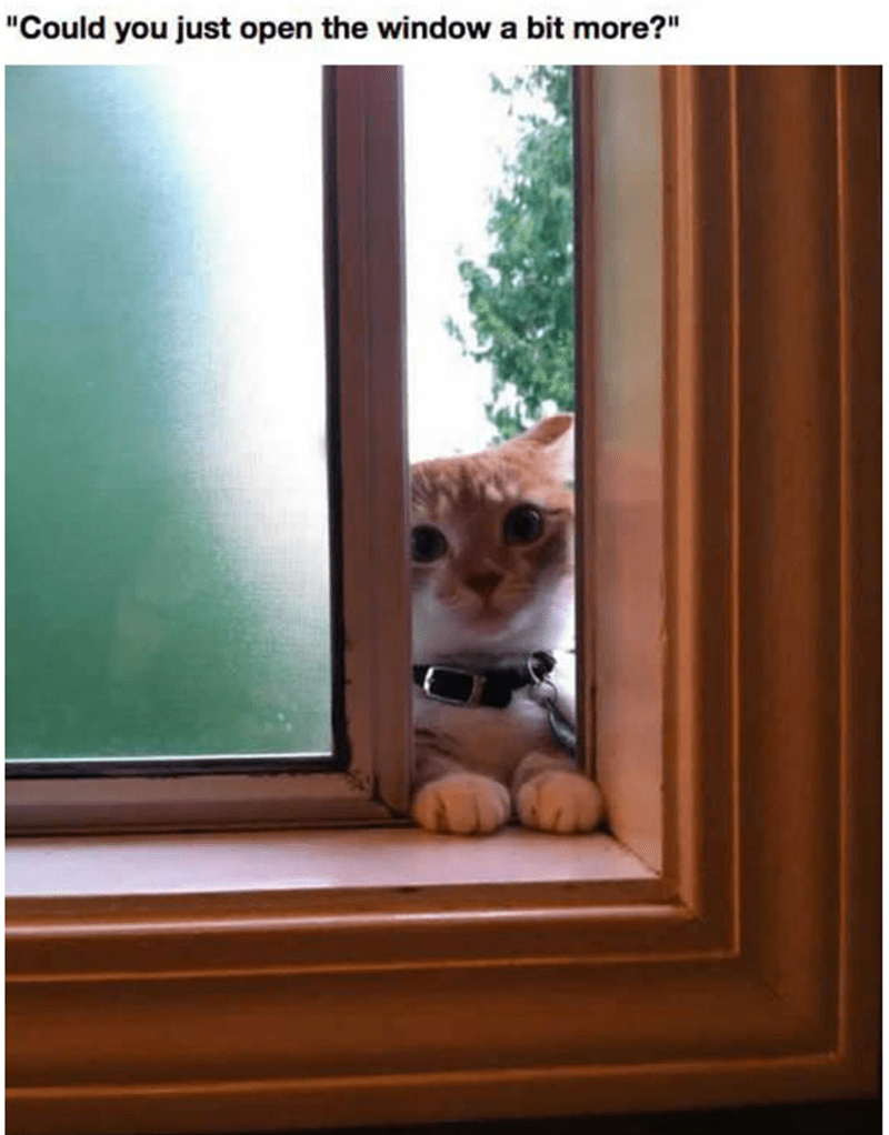 Cat politely wanting to have the window opened just a little more