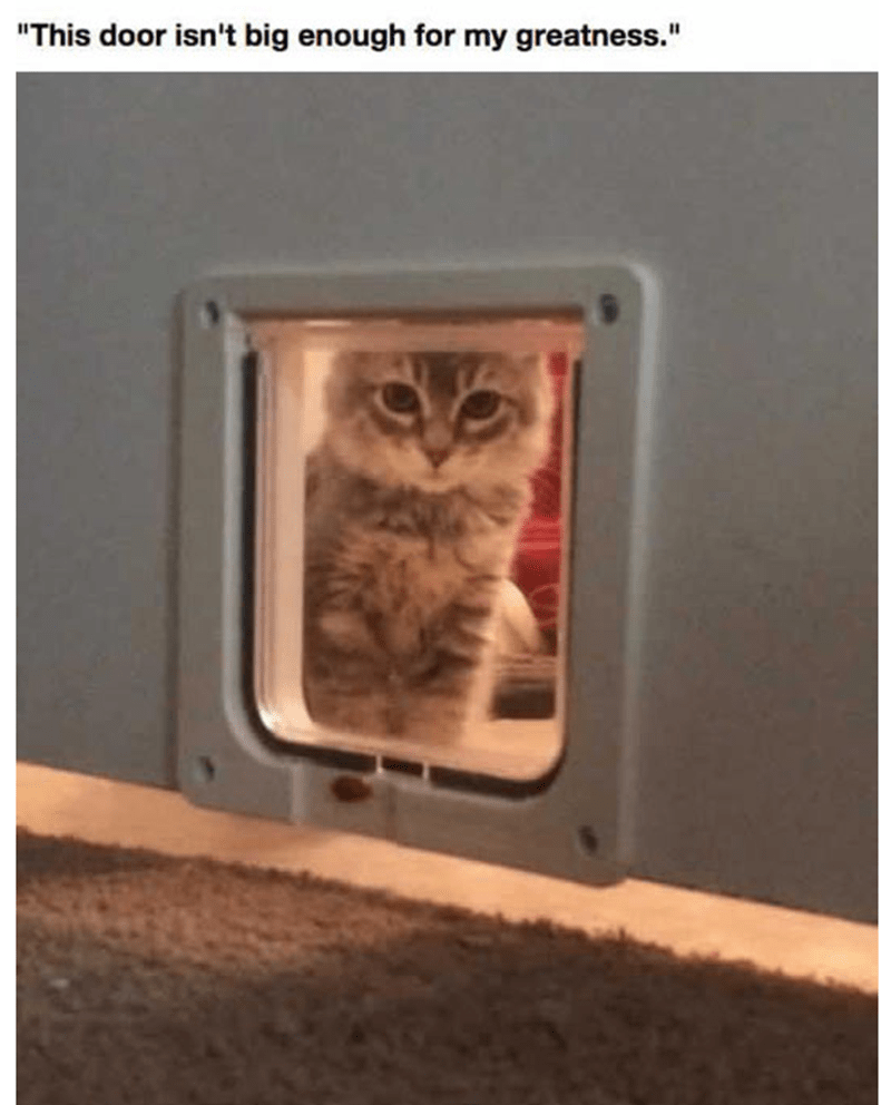 Kitten contemplating a cat door and deciding that it isn't big enough for his greatness.