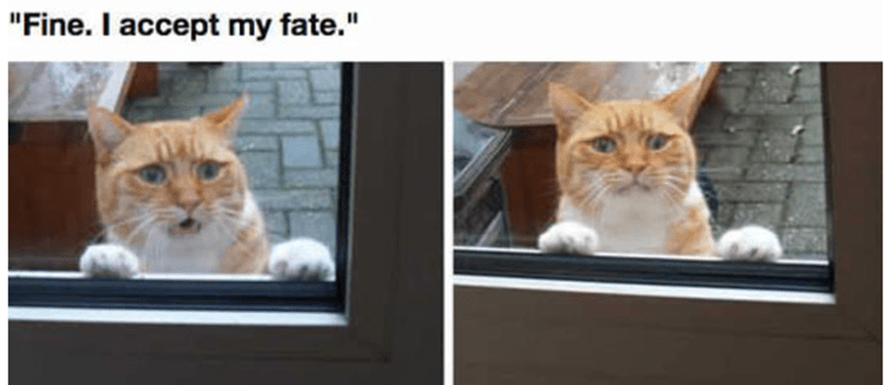 Meme of a cat accepting his fate of being cat outdoors forever.