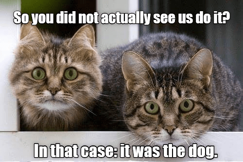 cat meme - Cat - So you did not actually see us do it? In that case: it was the dog,
