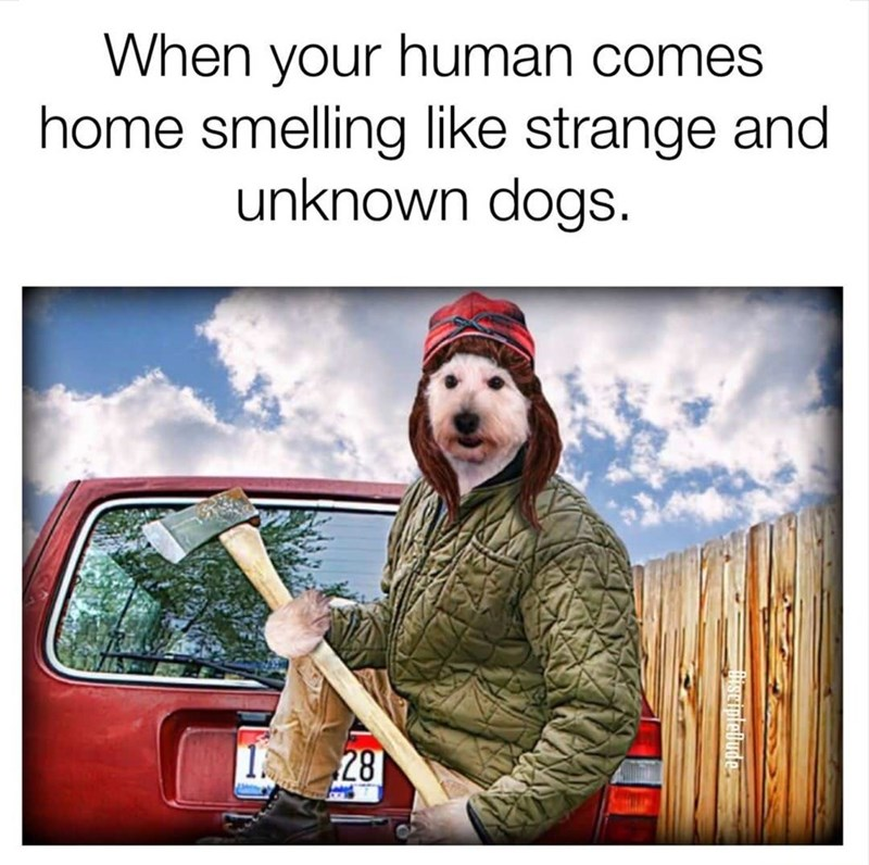 Funny meme about when you come home to your dog smelling like another dog