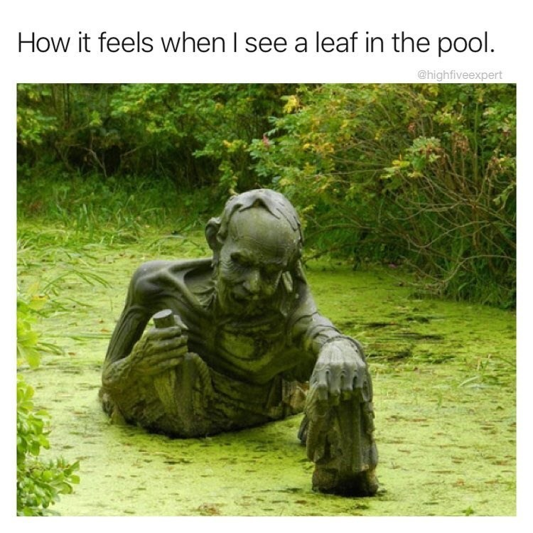 Funny mem eabout when you see a leaf in the pool and are scared.