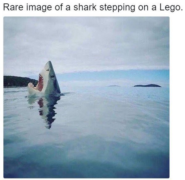 photo of a shark stepping on a lego