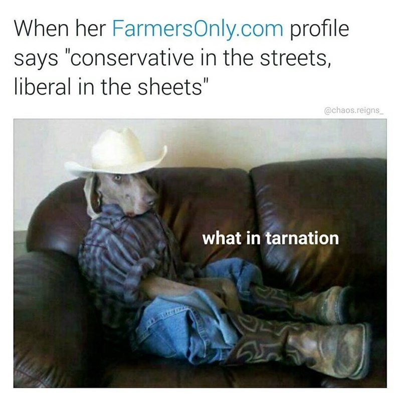 "Text - When her FarmersOnly.com profile says ""conservative in the streets, liberal in the sheets"" @chaos.reigns what in tarnation क"