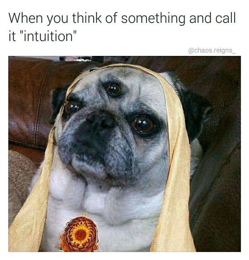 "Dog - think of something and call When you it ""intuition"" @chaos.reigns"