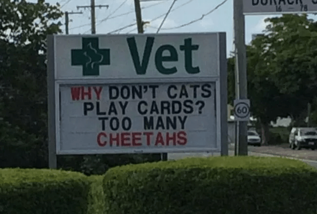 Sign - Vet WHY DON'T CATS PLAY CARDS? TOO MANY CHEETAHS 60