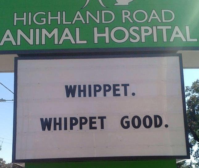 Text - HIGHLAND ROAD ANIMAL HOSPITAL WHIPPET. WHIPPET GOOD.