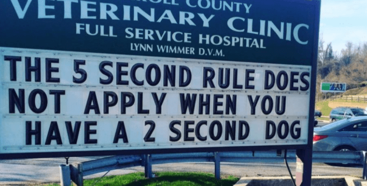 Text - UNTY VETERINARY CLINIC FULL SERVICE HOSPITAL LYNN WIMMER D.V.M. THE 5 SECOND RULE DOES NOT APPLY WHEN YOU HAVE A 2 SECOND DOG
