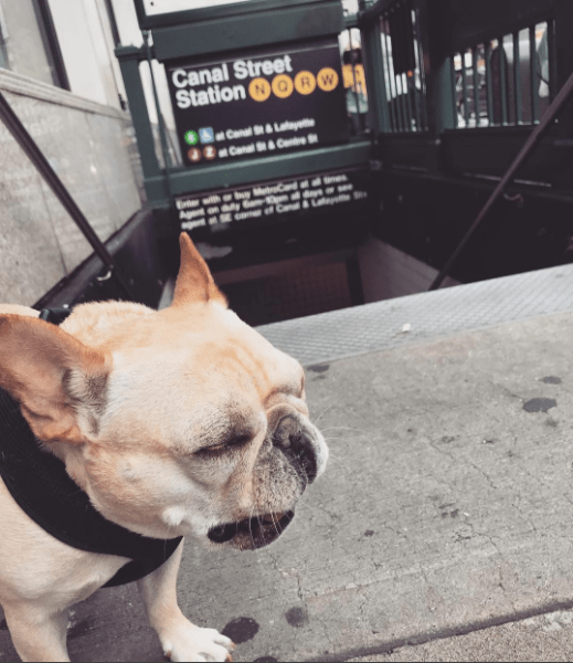 Dog - Canal Street Station RW Ba canal St&L 2 Can&Cne with r by Agent any c C &a