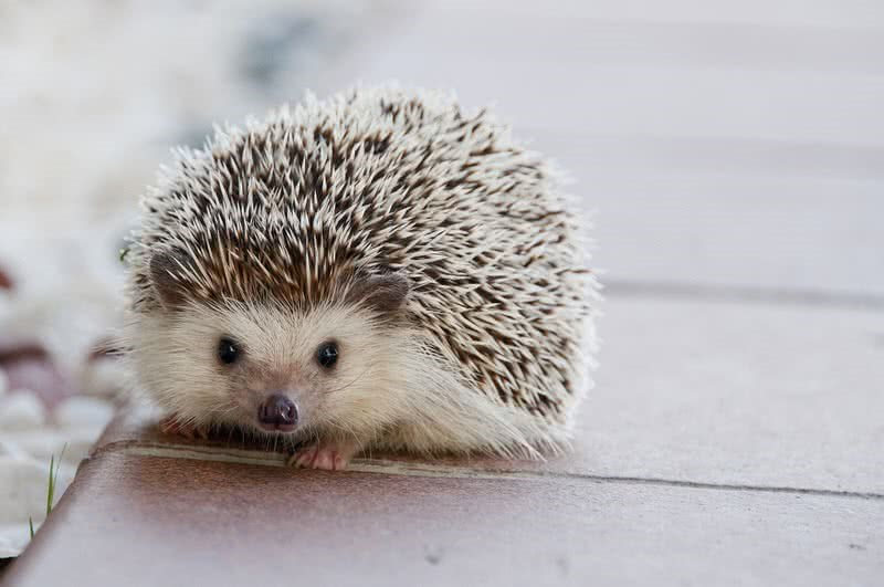 Gifs of cute baby animals doing what they do best - be cute. The cover photo is of a baby hedgehog with his face in the floor