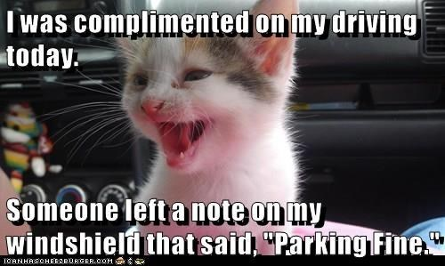 a funny meme of a cat thinking they know how to drive but really dont