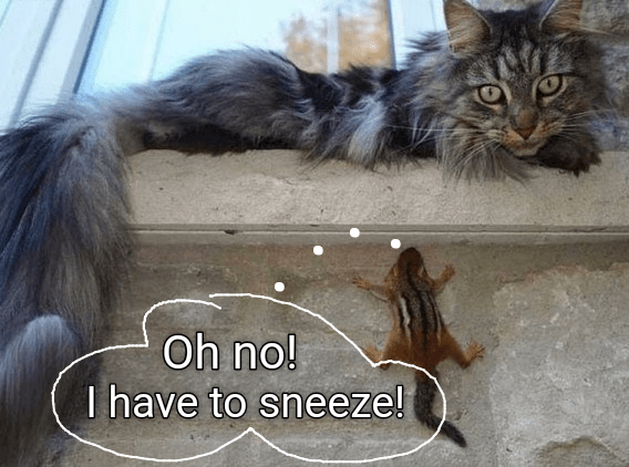 a funny cat meme of a chipmunck trying to hide from the cat but it needs to sneeze