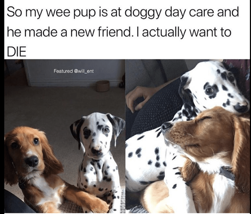 hump day memes | dog who made a puppy day care friend