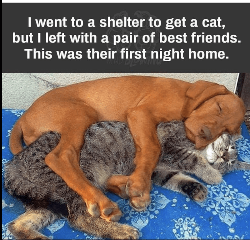 humpday meme of cat and dog that became best friends