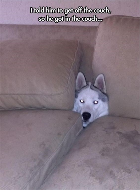 Mammal - Otold him to get off the couch, he got in the couch...