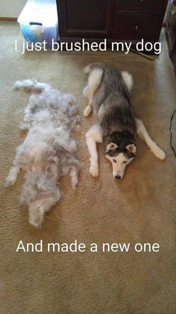 Dog - just brushed my dog And made a new one