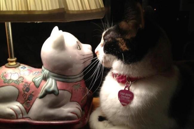 Cat - DEB BERG OWNER