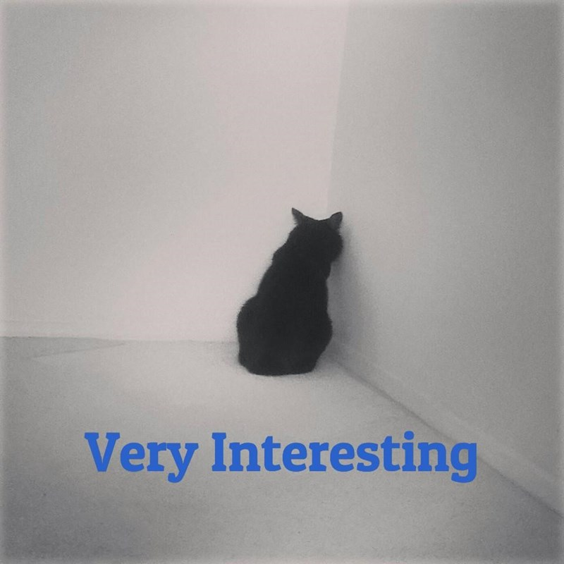Cat - Very Interesting