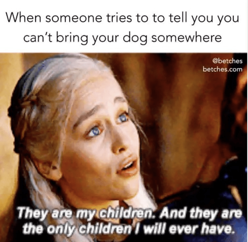 Game Of Thrones meme of Daenerys pleading for her dragons like people do for their dogs