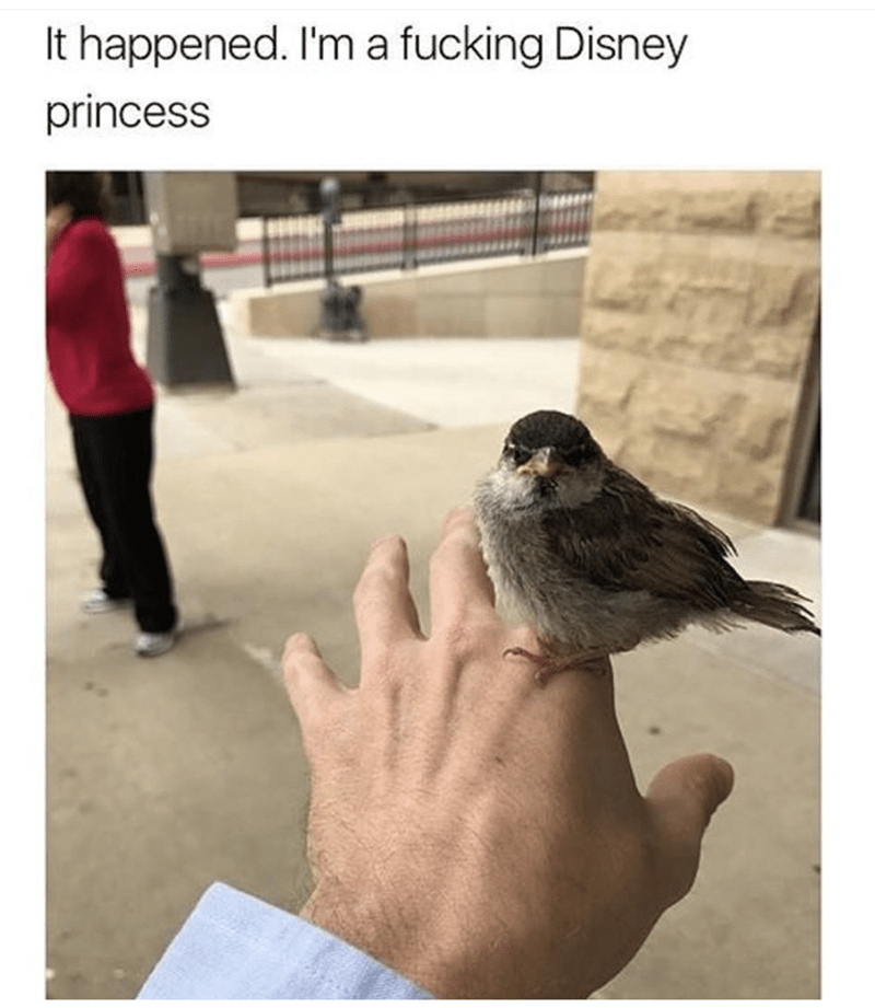 Meme of feeling like a Disney princess when a bird lands on your hand.