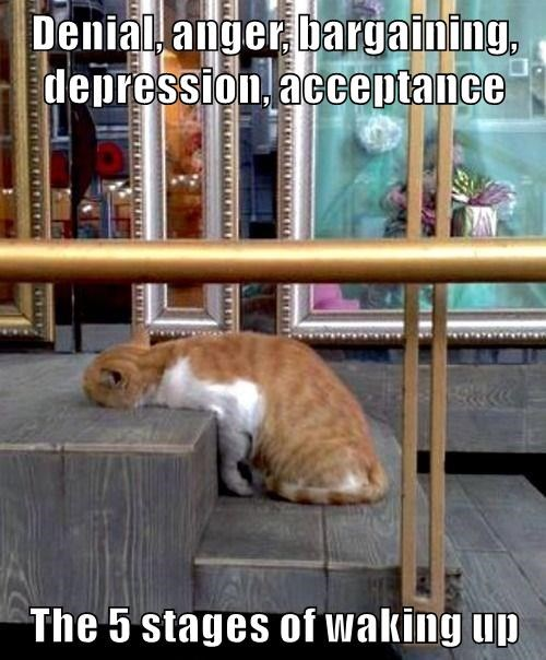 cat meme - Cat - Denial anger bargaining, depression, acceptance The 5 stages of waking up