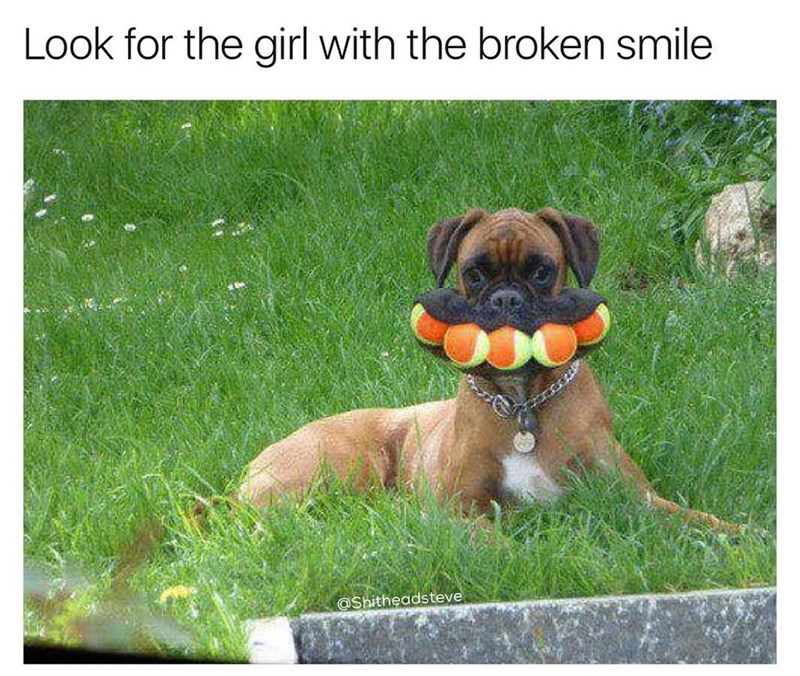 "Funny meme about a dog with a ton of balls in its mouth, caption says ""look for the girl with the broken smile."""