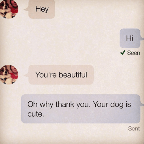 Text - Hey Hi Seen You're beautiful Oh why thank you. Your dog is cute. Sent