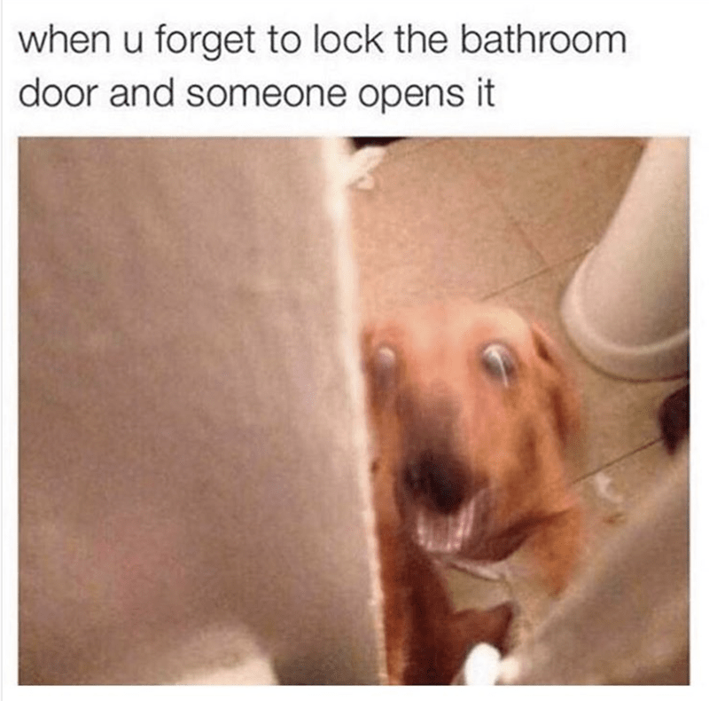 funny dog meme about when you forget to lock the bathroom.
