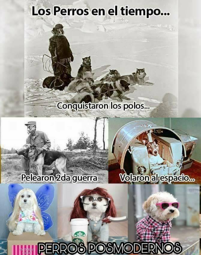 los perros en el tiempo meme primera guerra mundial hipster