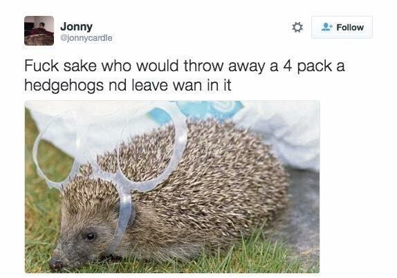 funny scottish posts on twitter Fuck sake who would throw away a 4 pack a hedgehogs nd leave wan in it