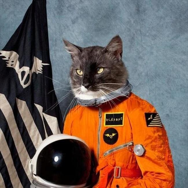 album cover - Cat - LAXONS