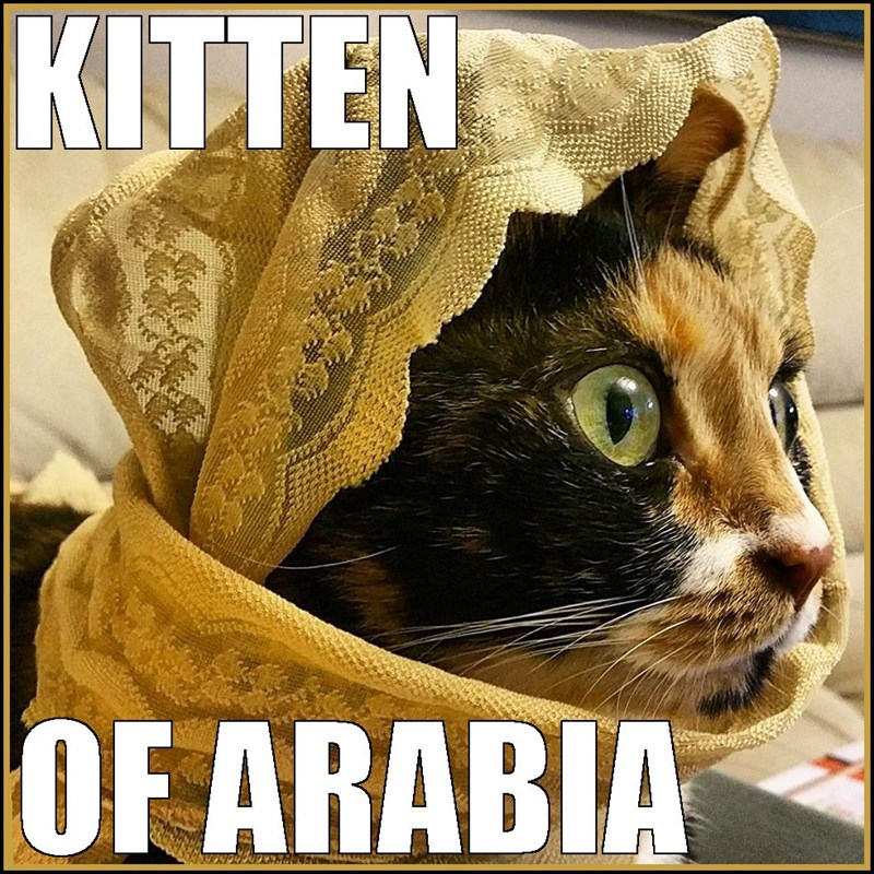 Kitten of Arabia cat meme