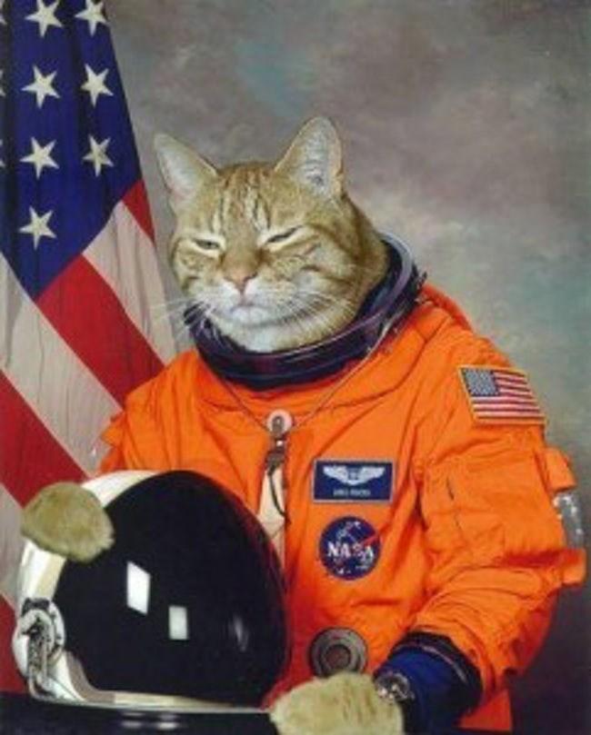 Cat - NASA