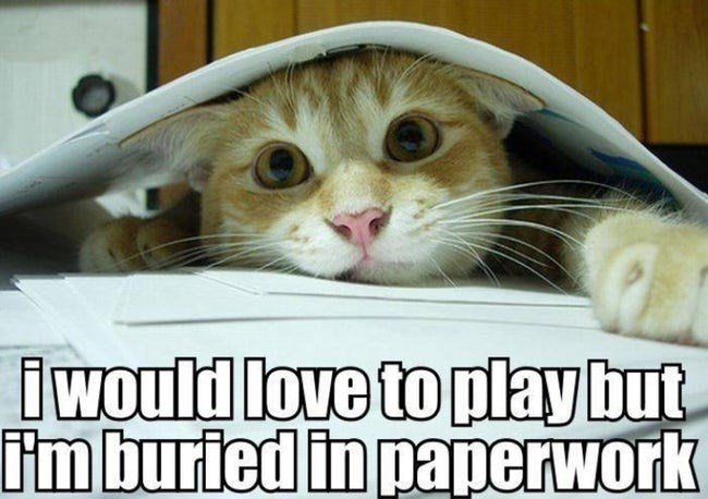 Cat - would love to playbut im buried in paperwork