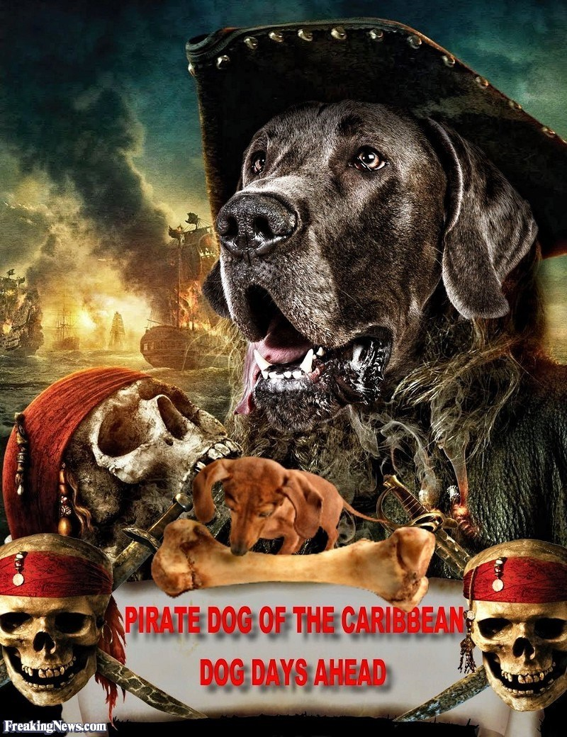 Dog - PIRATE DOG OF THE CARIBBEAN DOG DAYS AHEAD FreakingNews.com